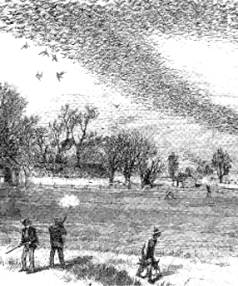 An 1875 illustration depicts the hunting of passenger pigeons.