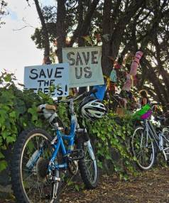 ONGOING SAGA: Supporters fighting to save the six pohutukawa on Great North Rd have used signage to raise awareness to the trees' plight.