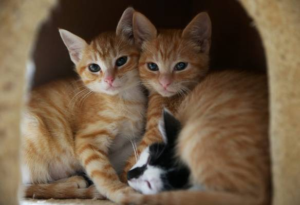 How about these cuddly kittens at the Invercargill SPCA?