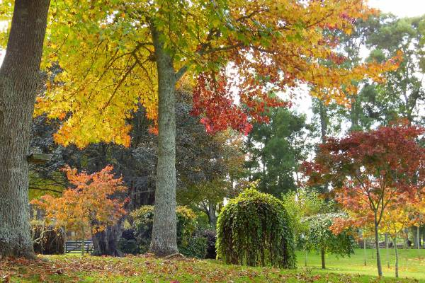Deciduous trees put on a stunning autumn show.