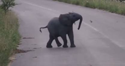 It's not great at chasing away the birds but this baby elephant is definitely having fun.