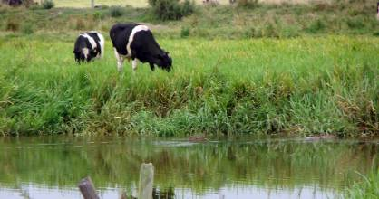 All cattle, deer and pigs should be kept out of rivers, lakes and wetlands, says the Land and Water Forum in its latest report.