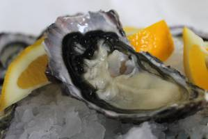 Oysters from around New Zealand will be on offer at the Auckland Seafood Festival.