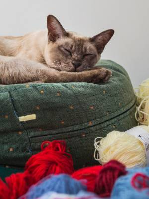 Suki clearly isn't worried about who all this wool belongs to. But if anyone knows, Suki's owner would love to return it. And apologise.
