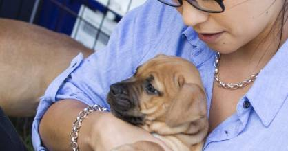 Fairfax reporter Brooke Bath cuddles up to a pawfect pup