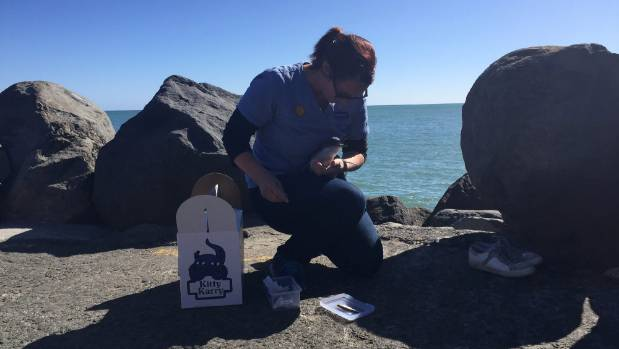 'Little Blue Penguin Taranaki' was released at the New Plymouth breakwater on Saturday, the same area it was found ...