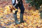 Clean up autumn leaves now.