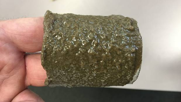 """""""Lake snot"""" attached to a water filter in Wanaka. The substance has now been found in three South Island lakes."""