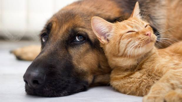 A project launched in the UK is helping vets and pet owners get a better understanding of pets' health.