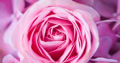 Roses benefit from a good feed in spring - any store-bought or homemade fertiliser will do.