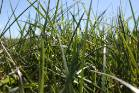 Ryegrass not always the best option, says rural consultant Graham Butcher.
