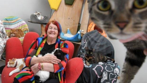 Kim Kendall, with feline friends at The Chatswood Cat Palace, has signed her veterinary practice up to the VetCompass ...