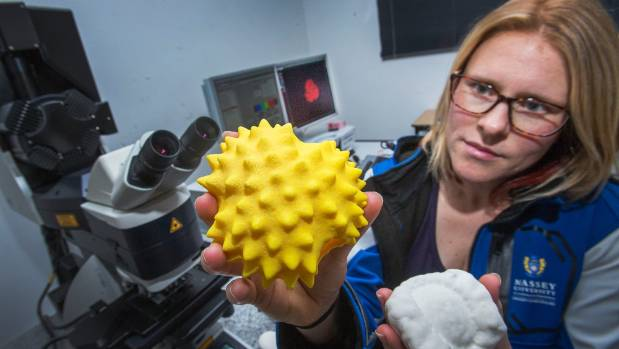 Massey lecturer Katherine Holt's accurate model pollen granules, thousands of times their real size, let students get a ...