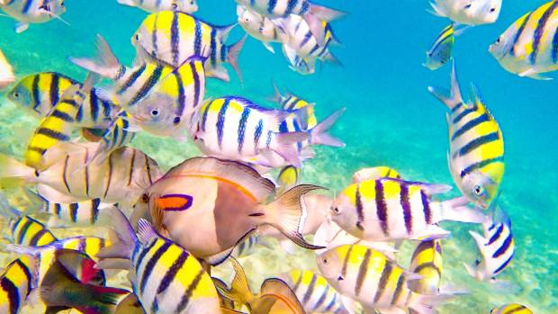 A variety of reef fish.