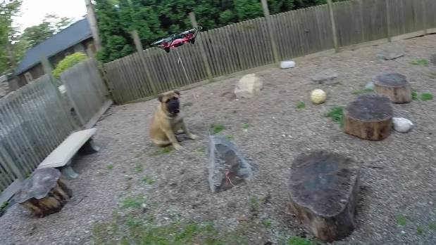 Biscuit The Dog Video Drone