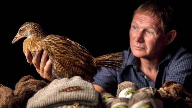 Roger Beattie with a buff weka, an at-risk species he wants to farm and use to market his high-end wool products.