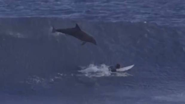 Video captures dolphin jumping on young Australian surfer Jed Gradisen