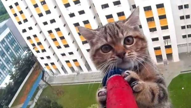 Dramatic kitten rescue from 12th storey ledge of Singapore.