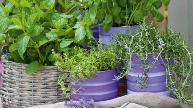 Grow just a few herbs in pots to keep your kitchen supplied year-round.